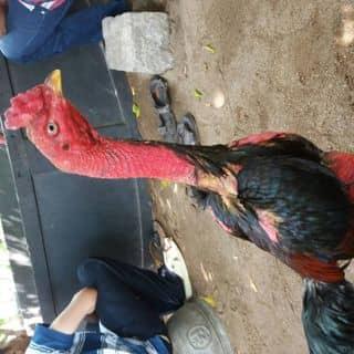 3.25kg của dhq9q tại KDC Duy Tân, Thành Phố Tuy Hòa, Phú Yên - 999915