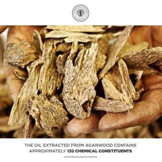 Agarwood Fact của uories_store tại 86 Phan Đình Giót - Pleiku - Gia Lai - Việt Nam, Thành Phố Pleiku, Gia Lai - 5996703