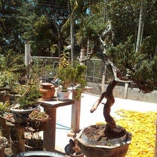 At ca của dungdualinhbobinh tại Quảng Ngãi - 3861589