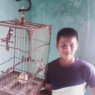 Ban chim dep của hyvong16 tại Quảng Bình - 1465174