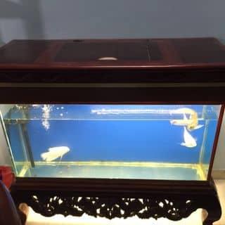 Bể cá của nguyenthitrang8889 tại Hà Khẩu, Thành Phố Lào Cai, Lào Cai - 1868275