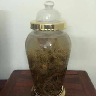 Bình rượu ngâm tam thất tươi của hoangdung165 tại Điện biên phủ, Huyện Điện Biên, Điện Biên - 1130992