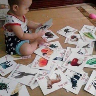 Bộ 416 ảnh khám phá thế giới cho bé của nhoxcung tại Tx.Kiến Tường, Huyện Tân Thạnh, Long An - 668536