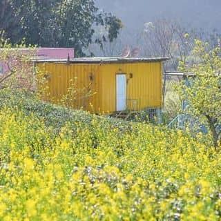 Bungalow container của tothao981 tại Phiêng Luông, Huyện Mộc Châu, Sơn La - 4492786