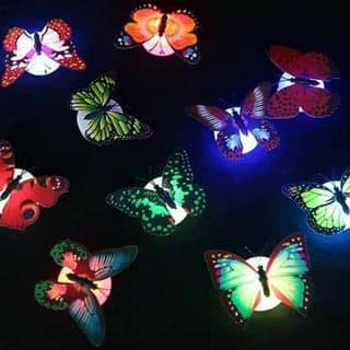 bướm dán tường của ha_rika_le tại Hồ Chí Minh - 3413952