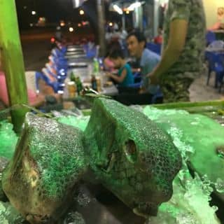 Cá bò hòm  của vietnamchemtech tại 0986775812, Thành Phố Phan Thiết, Bình Thuận - 1775737