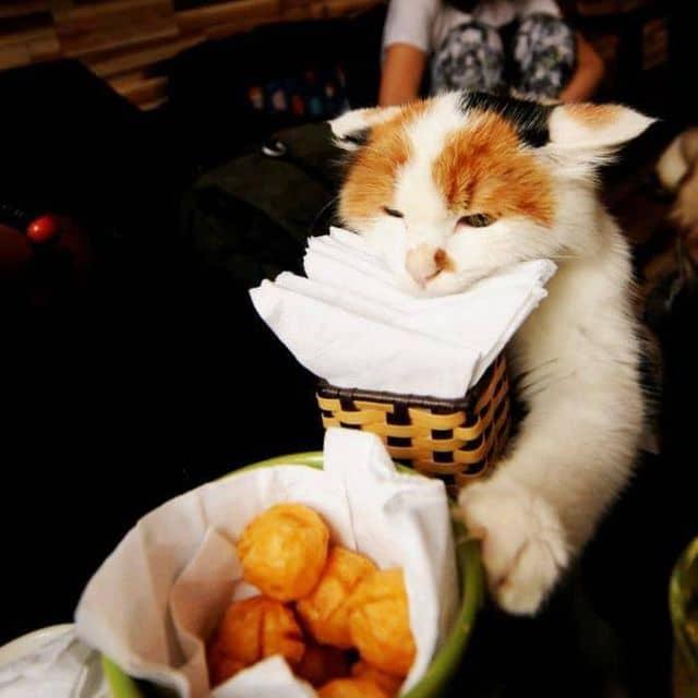 Cá viên của Phụng Tiên La tại Ailu Cat House Cafe - Cafe Mèo - 49498