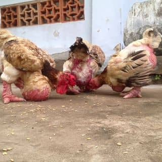 Các e ấy rất chăm ăn! của lam_gadongtao tại Hồ Chí Minh - 1110823