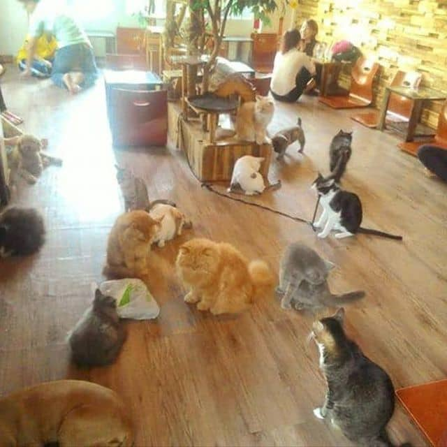 Cafe mèo của Anh Dong tại Ailu Cat House Cafe - Cafe Mèo - 49502