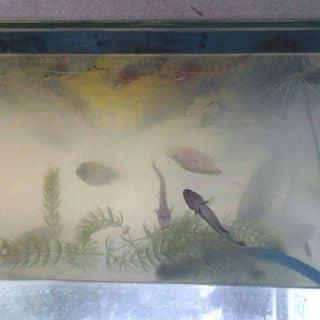 Chả cá xào cay của lunshanh1 tại Shop online, Huyện Châu Thành, Tiền Giang - 2327534