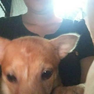 Chó  của tannhi3 tại Hồ Chí Minh - 3518362