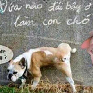 Chó của luuthanh22 tại Shop online, Huyện Châu Thành, Tiền Giang - 2360218