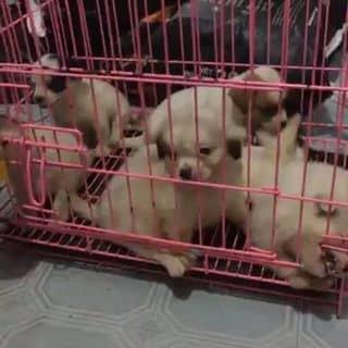Chó cưng của hera96 tại Phú Thọ - 3414436