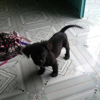 Chú cún nhỏ dễ thương của minhsstranss1 tại Shop online, Quận Tân Phú, Hồ Chí Minh - 3357019