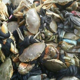 của biển  có ai mua cua ăn mua dum em của cauuthole4 tại Chợ Trà Vinh, phường 3, Thị Xã Trà Vinh, Trà Vinh - 2073834