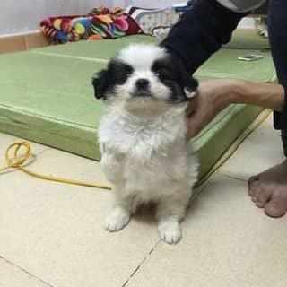 Cún của huyenscuns tại Thanh Hóa - 2878180
