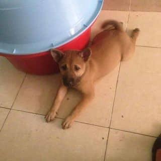 Cún con của hothientam tại Bình Dương - 3187534