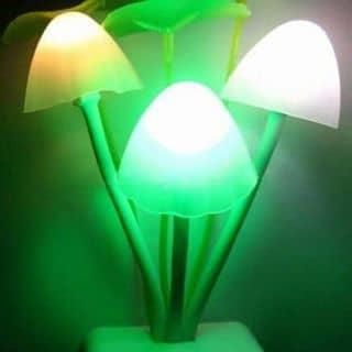 Đèn ngủ của npt0210 tại Tây Ninh - 3323175