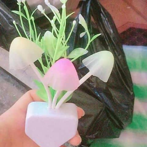 ĐÈN ngủ 3 cây nấm - 6470770 hoangtrinh103 - Linh Huong store - Shop online,