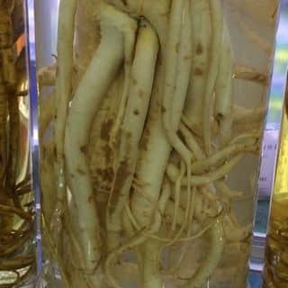 Đinh lăng tửu của nuochoaxachtay2112 tại Hồ Chí Minh - 1418264