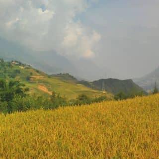 Du lịch sapa của hangut2 tại Lào Cai - 921039