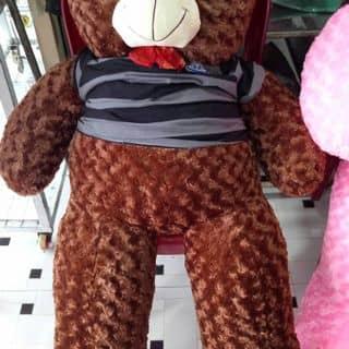 Gấu nau của bongbong150 tại Vĩnh Long - 2225521