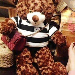 Gấu teddy  của quyensuciu tại Xã Phú An, Huyện Phú Vang, Thừa Thiên Huế - 3024136