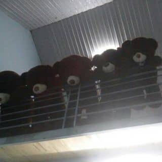 Gau teddy cực xinh của huyle247 tại Chợ Đêm Đà Lạt, Thành Phố Đà Lạt, Lâm Đồng - 1153474
