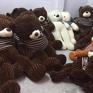 Gau teddy cực xinh của nguyenhieu737 tại 202 Lý Thường Kiệt, Kỳ Bá, Thành Phố Thái Bình, Thái Bình - 1290388
