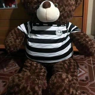 Gấu teddy huế của quyensuciu tại Xã Phú An, Huyện Phú Vang, Thừa Thiên Huế - 3023616