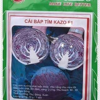 Hat giong bap cai tim của conthocon2 tại Lào Cai - 1432869