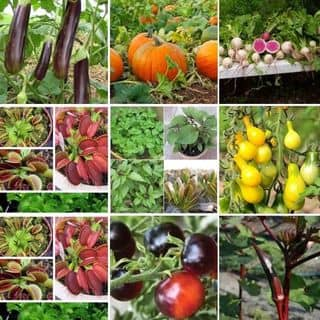 Hạt giống cây tí hon của ltien9019 tại Bình Định - 822626