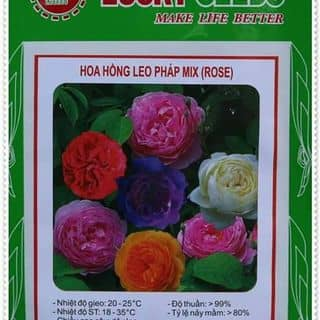 Hat giong hoa hong của conthocon2 tại Lào Cai - 1432925