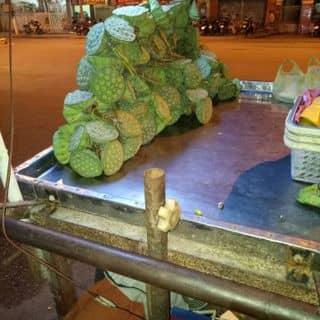Hạt sen tuoi của nhamdanh tại 69, 30 Tháng 4, Thành Phố Mỹ Tho, Tiền Giang - 1188255