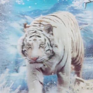 Hổ con của phamthaoanh2 tại Hải Dương - 1280007