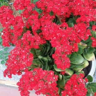 Hoa đẹp của giameo2 tại Sơn La - 2350735