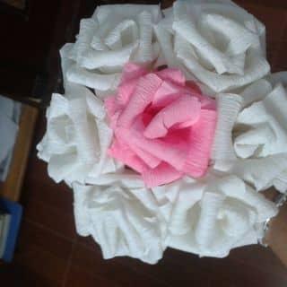Hoa giay của chilinh135 tại Cầu Bo,  P. Lê Hồng Phong, Thành Phố Thái Bình, Thái Bình - 1457157