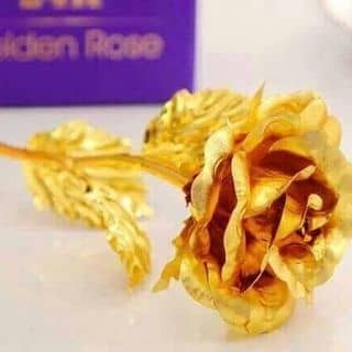 Hoa hồng 20/10 của honghanh165 tại Đồng Nai - 1238030