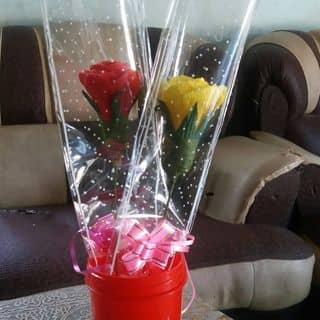 Hoa hồng giấy nhún của phamsuong24 tại Ninh Thuận - 3144952