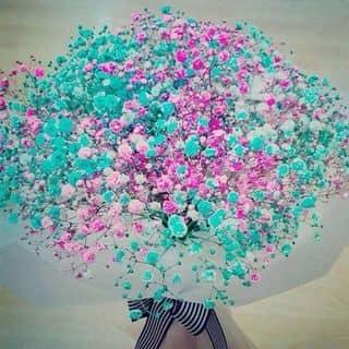 Hoa khô đủ màu của maily39 tại Chợ Đêm Đà Lạt, Thành Phố Đà Lạt, Lâm Đồng - 1404645