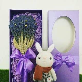 Hộp lavender + gấu của trungduongsongtoan tại Chung cư K26, Phường 7, Quận Gò Vấp, Hồ Chí Minh - 1131887