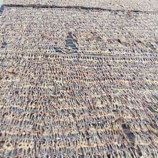 Khô nhái- vũ nữ chân dài giá 155k 0.5kg của tynguyenkg tại Chợ Minh Lương, tt. Minh Lương, Huyện Châu Thành, Kiên Giang - 1167540