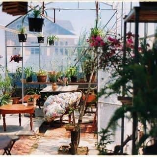 Không gian của thaole89 tại 2/35 Nam Hồ, Thành Phố Đà Lạt, Lâm Đồng - 2854801