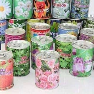 Lon hoa của phamphuongthao8 tại Thái Bình - 1213885