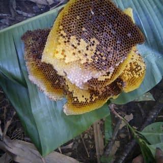 Mật ong rừng nguyên chất 100% ở vùng núi tỉnh Lạng sơn của minhh01649287076 tại Phạm Văn Đồng, Thị Xã Tuyên Quang, Tuyên Quang - 4576330
