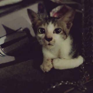 Mèo 😍 của huneun tại Thái Nguyên - 743452