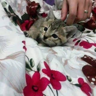 mèo con lon ton của thuymeu tại Kiốt 1+2+3 Khu Tự Xây Đường Kênh Liêm, Thành Phố Hạ Long, Quảng Ninh - 996901