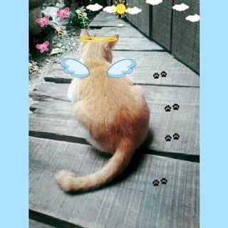 Mèo cưg của kimnhuong tại Kiên Giang - 1240508