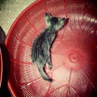 Mèo ta của meootra tại Hải Phòng - 1715833