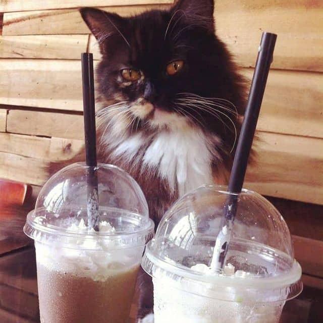 Mocha blended của Hằng Đặng tại Ailu Cat House Cafe - Cafe Mèo - 49500